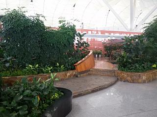The green area in the terminal of Shenyang Taoxian international airport