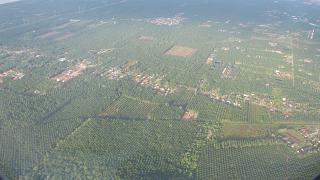 Пальмовые плантации в Малайзии