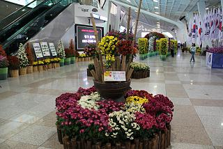 The chrysanthemum festival at the airport Seoul Gimpo