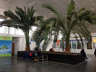 Palm trees in the terminal building of the airport Volgograd Gumrak