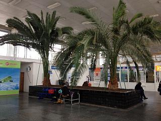 Пальмы в аэровокзале аэропорта Волгоград Гумрак