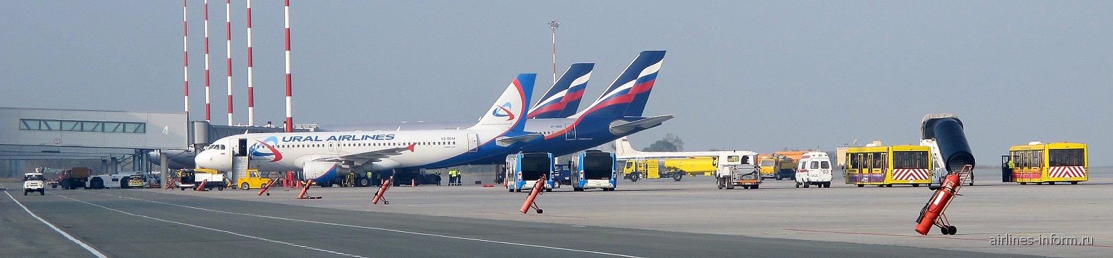 Самолеты Владивосток Авиа в аэропорту Владивостока