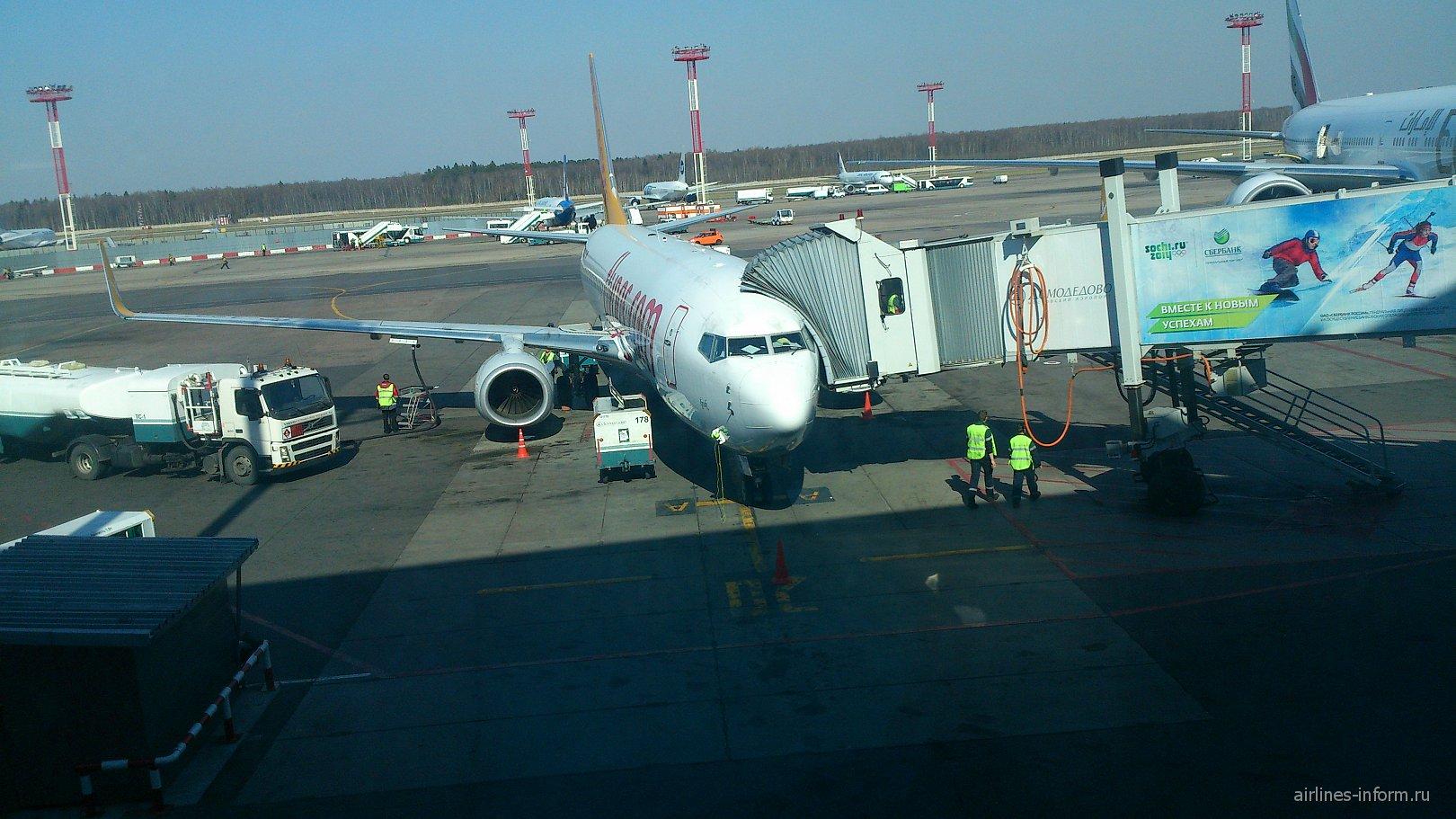 Боинг-737-800 авиакомпании Пегасус в аэропорту Домодедово