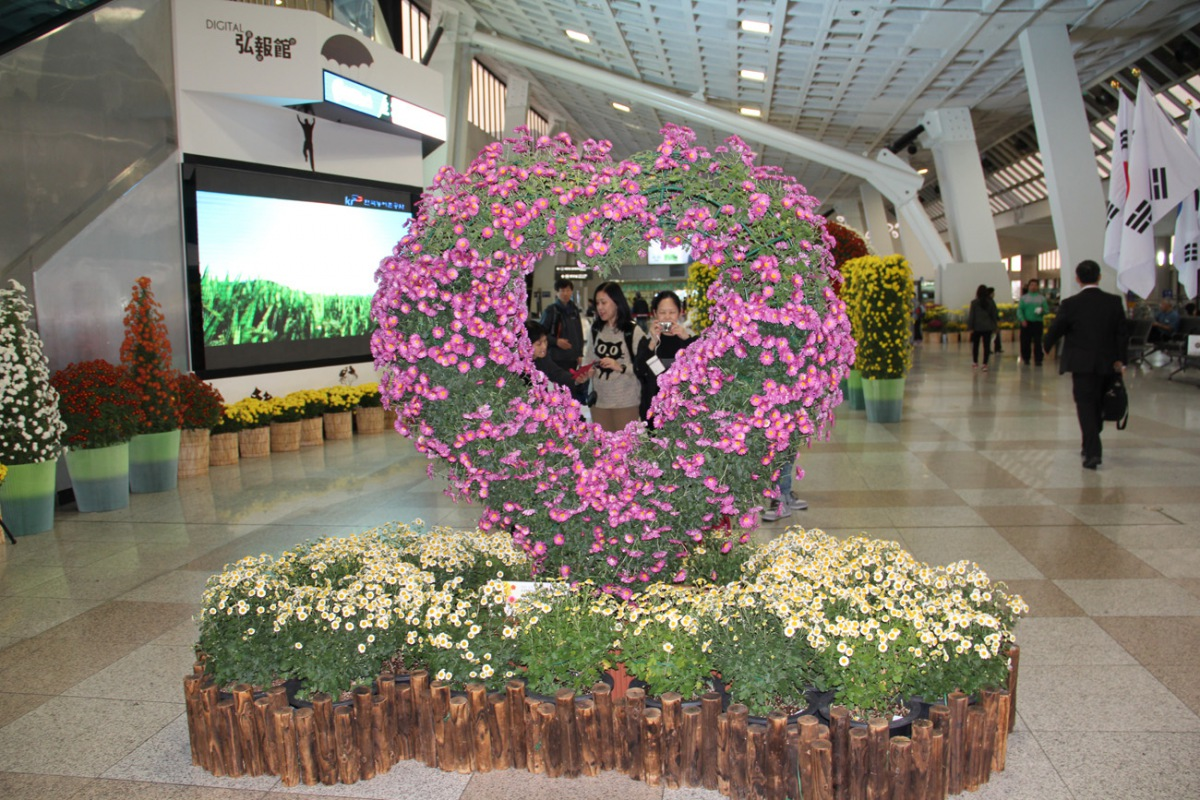Chrysanthemum festival at the Gimpo International airport