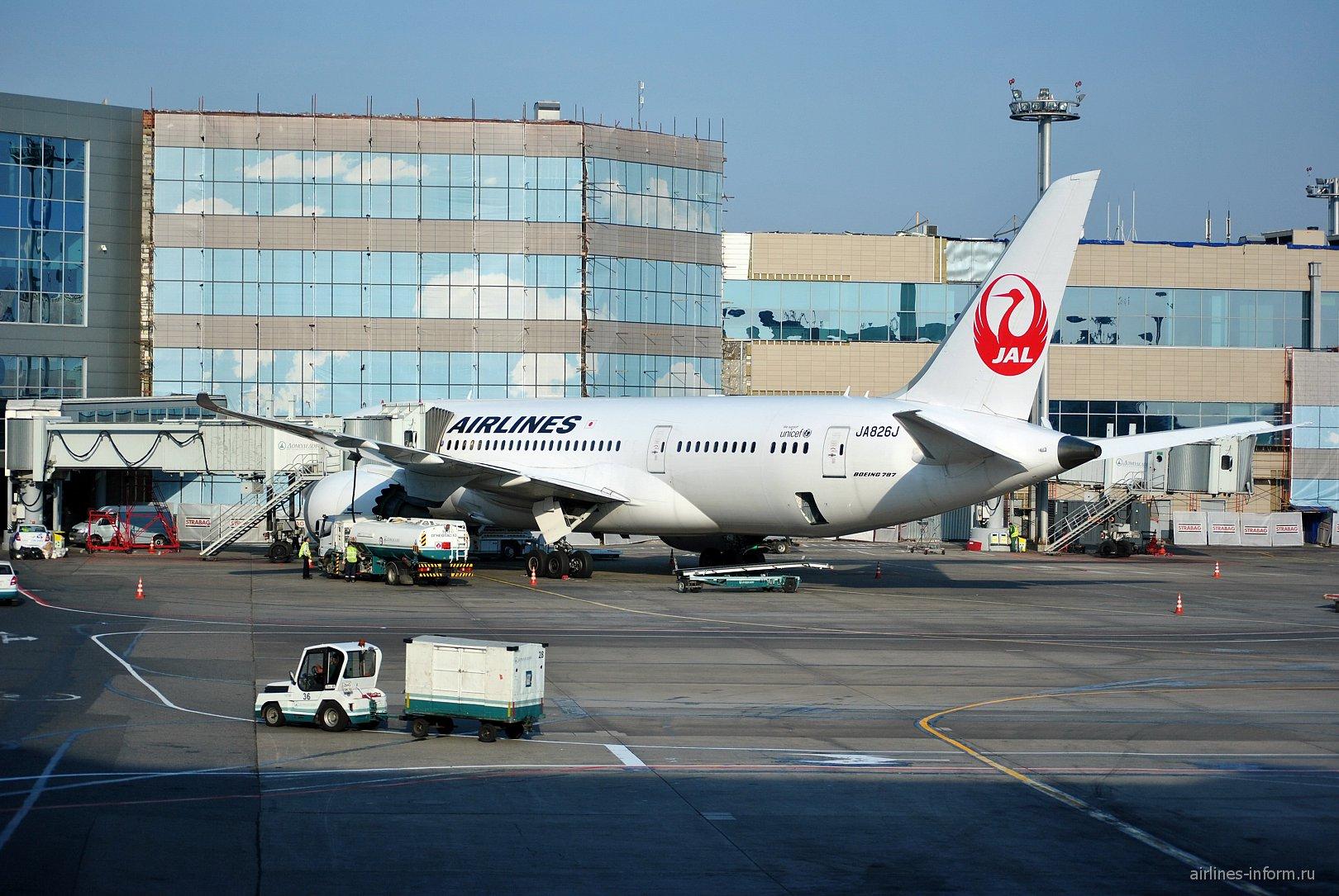 Боинг-787-8 Японских авиалиний в аэропорту Домодедово
