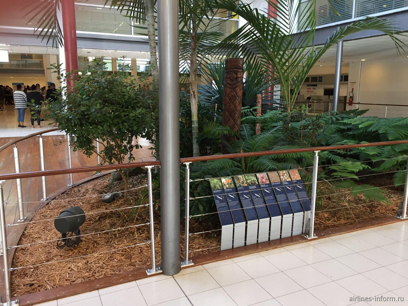 Растительность Новой Каледонии в аэропорту Нумеа Ла-Тонтута