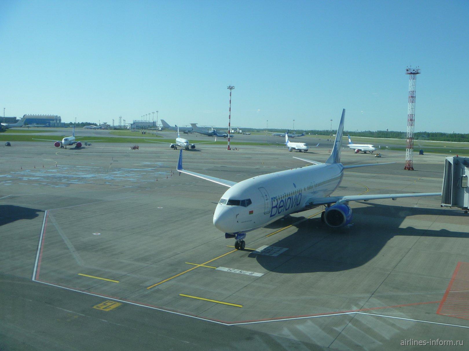 В жаркий Египет и обратно. Часть 1. Минск - Хургада на Boeing 737-800 Belavia.
