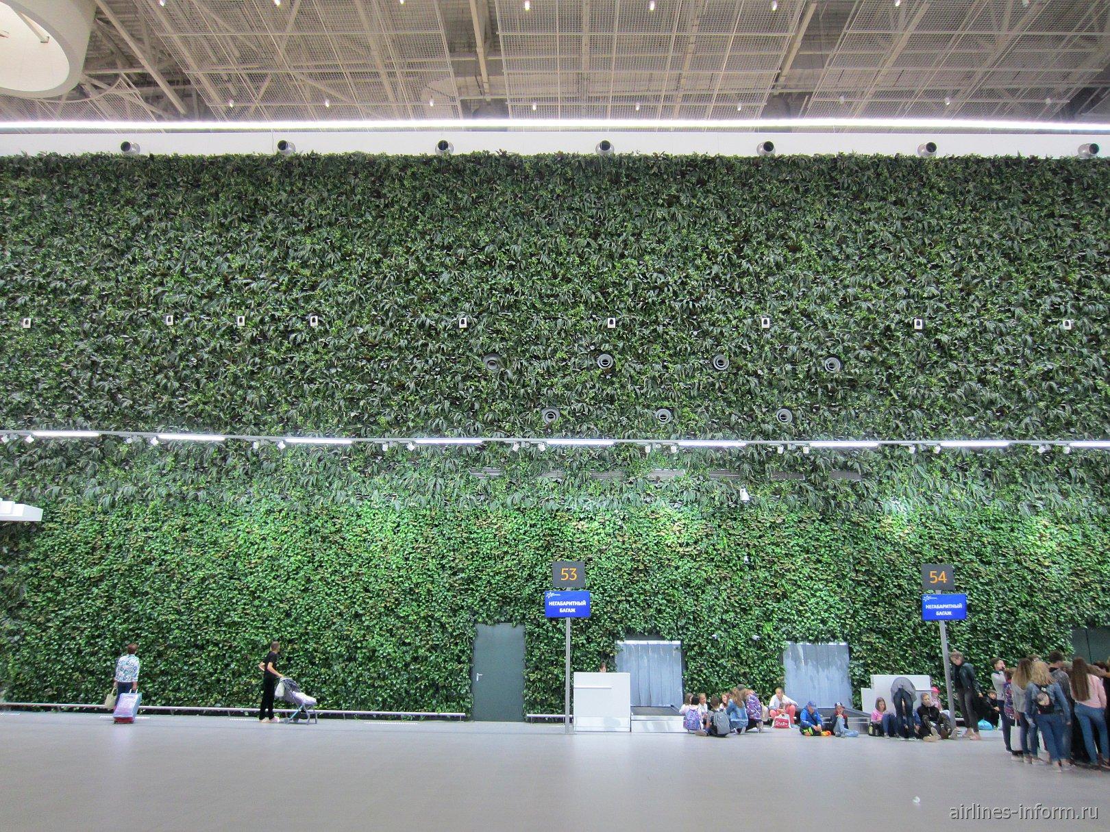 Стена из живых растений в новом пассажирском терминале аэропорта Симферополь