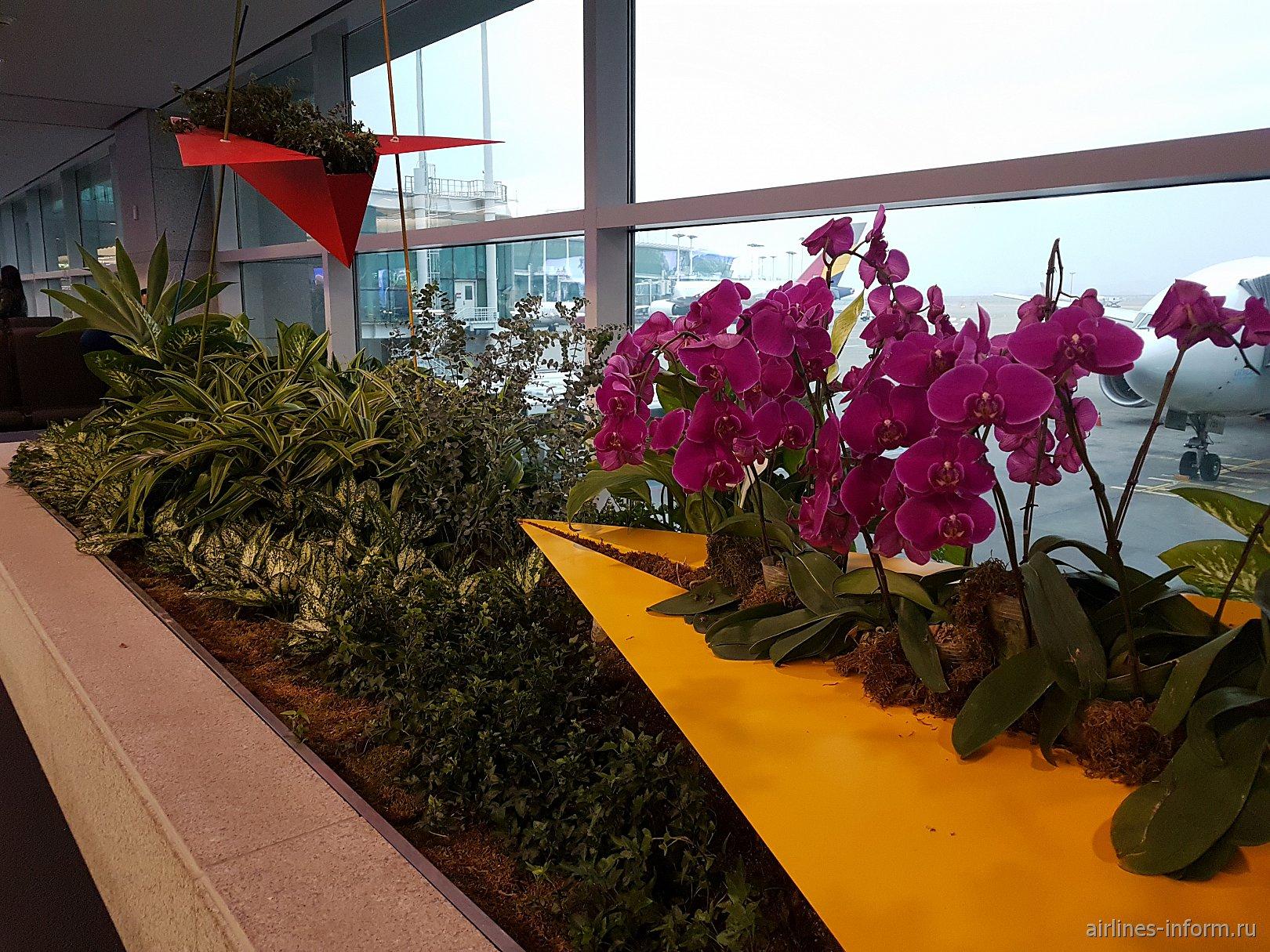 Цветы в аэропорту Сеул Инчхон
