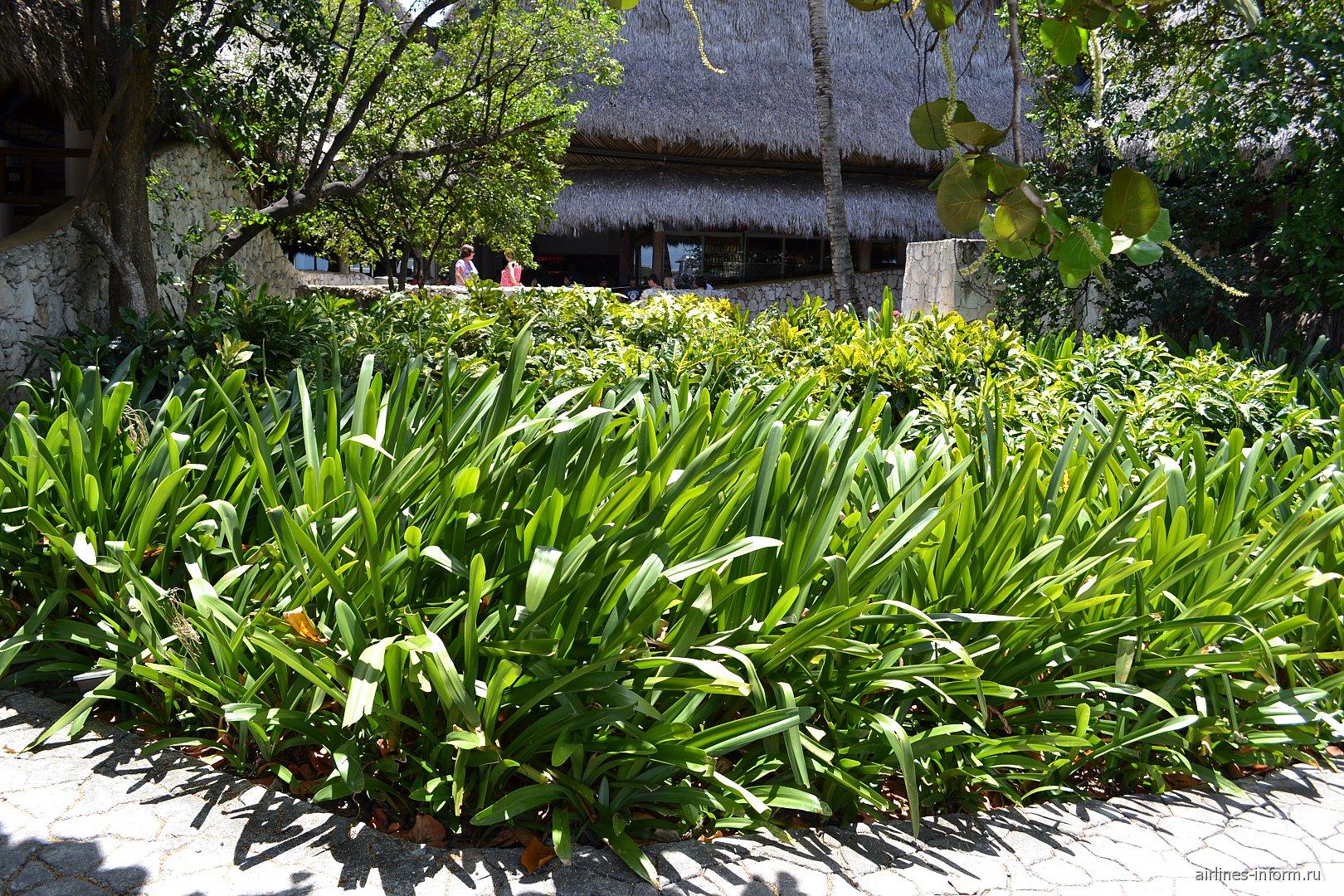 Растения в аэропорту Пунта-Кана