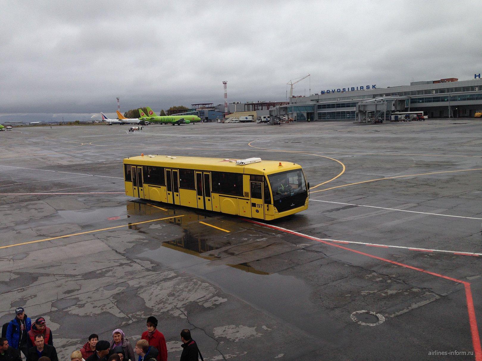 Посадка на рейс Новосибирск-Москва авиакомпании Трансаэро