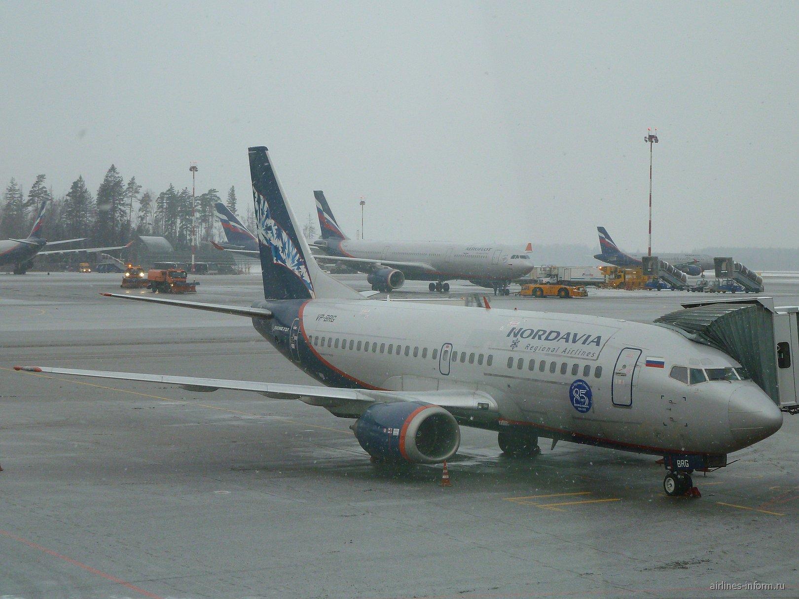 """Самолет Боинг-737-500 VP-BRG авиакомпании """"Нордавиа"""" в аэропорту Шереметьево"""