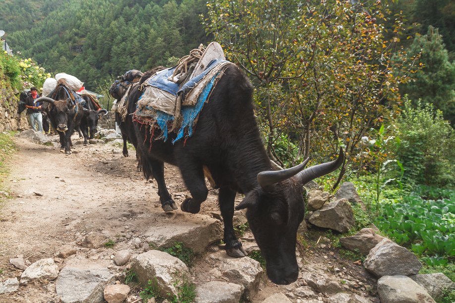 Вид на Гималаи