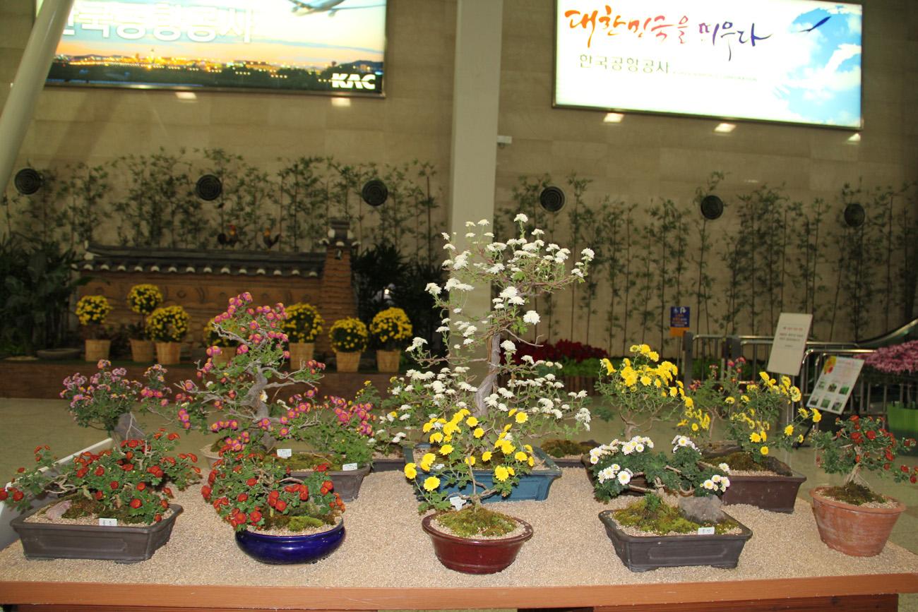 Фестиваль хризантем в аэропорту Сеул Гимпо