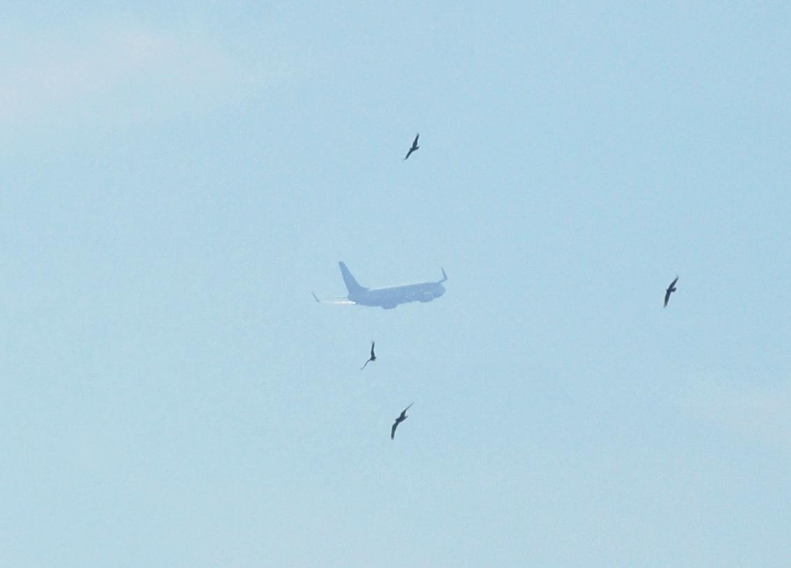 Боинг-737-800 набирает высоту