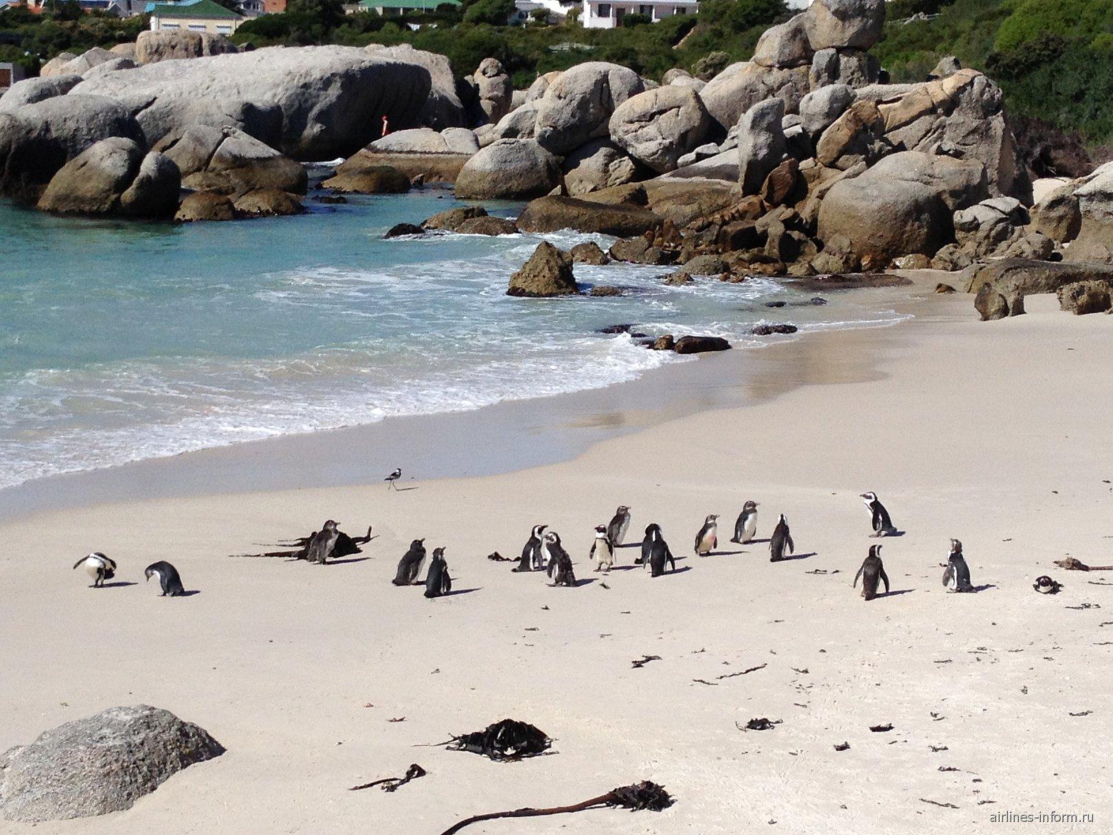 Пингвины Южной Африки