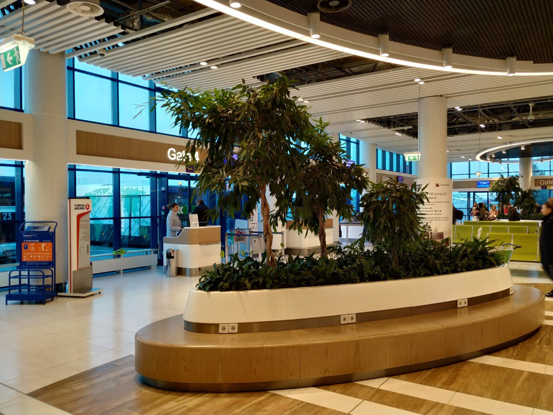 Зеленый островок в чистой зоне аэропорта Кишинев